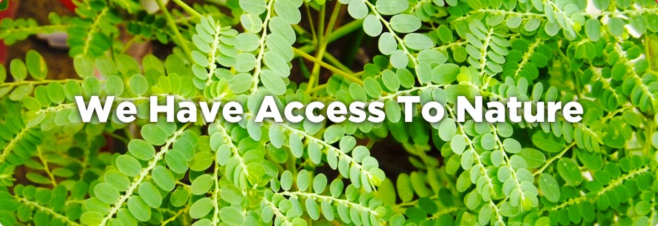 2 Access to Nature