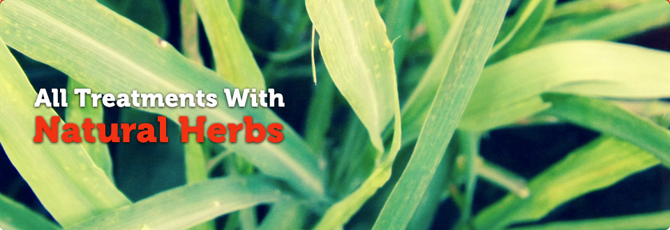 4 Treatments With Natural Herbs